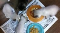 子猫保育園